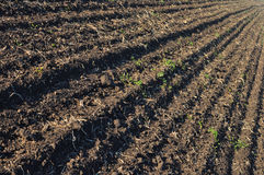 Plowed field Stock Photos