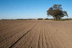 Plowed field. Freshly plowed field and a lone tree in the countryside Stock Image