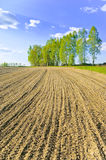Plowed field. Field plowed under crops and a birch grove on a hill Stock Image