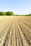 Plowed field. Furrows of the plowed field converging on horizon Stock Photos