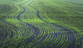 Plowed field Royalty Free Stock Photos