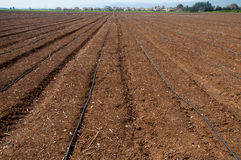 Plowed field. Fragment of the plowed kibbutz field in northern Israel Royalty Free Stock Photography
