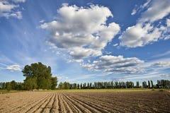 Plowed field Royalty Free Stock Image