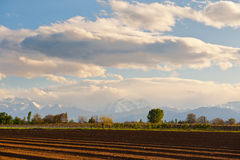 Plowed Field. In Piedmont on the Background of Snow-capped Alps Stock Photography