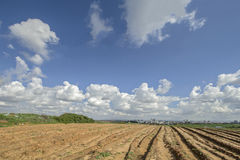 Plowed field. Royalty Free Stock Image