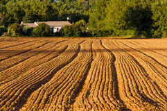 Plowed field Royalty Free Stock Images
