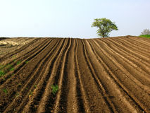 Plowed field. N the spring Royalty Free Stock Photo