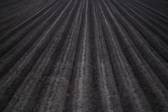 Plowed Field. Rich, black soil Stock Photography