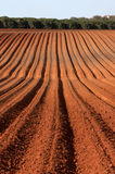 Plowed field. In early summer Royalty Free Stock Photo