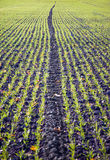 Plowed field in autumn Royalty Free Stock Image