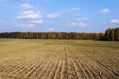 Plowed field in autumn. Plowed field against of an autumn forest background, sunny day Stock Photo