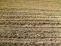 Plowed field background Royalty Free Stock Photos