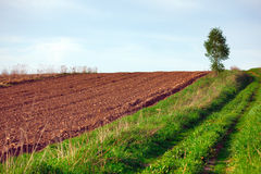 Plowed field and birch tree Royalty Free Stock Photos