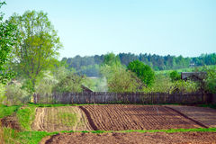 Plowed field and birch tree Royalty Free Stock Images