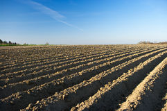 Plowed field and blue sky Stock Photos