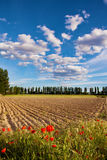 Plowed field Royalty Free Stock Image