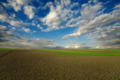Plowed field and cloudy sky Stock Image