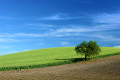 Plowed field in countryside Royalty Free Stock Image