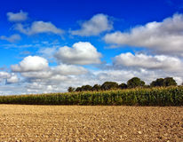 Plowed field in countryside Stock Image