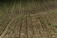 Plowed field in countryside Royalty Free Stock Photos