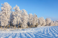 Plowed field covered with snow Royalty Free Stock Photos