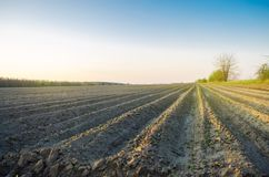 Plowed field after cultivation for planting agricultural crops. Landscape with agricultural land. Beds for plants. Agriculture,. Agroindustry. Farming stock photography