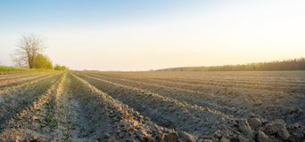 Plowed field after cultivation for planting agricultural crops. Landscape with agricultural land. Beds for plants. Agriculture,. Agroindustry. Farming royalty free stock photography