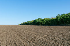 Plowed field and deep blue sky. Plowed field with trees and deep blue sky Royalty Free Stock Image