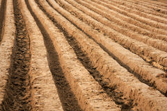 Plowed field. In early autumn Royalty Free Stock Image
