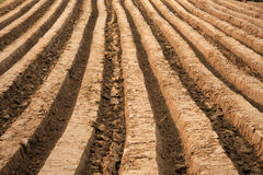 Plowed field. In early autumn Stock Photos
