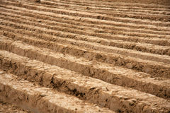 Plowed field. In early autumn Stock Photo