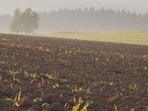 Plowed field early  morning Royalty Free Stock Images