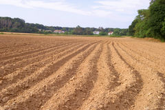 Plowed field for Fall crops. Tilled rich soil plowed in rows. Central New Jersey landscape. July  preparation for the Autumn crops Royalty Free Stock Images