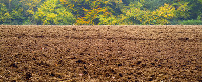 Plowed field and forest Stock Image