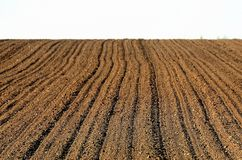 Plowed field. The forrows of a well plowed field are like grooves Stock Images