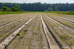 Plowed field. Fresh earth, agriculture Royalty Free Stock Image