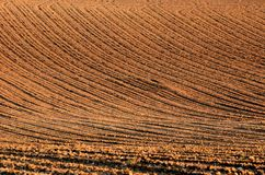 Plowed field. Furrows of plowed field like wrinkles of a face Royalty Free Stock Image