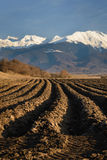 Plowed Field with Furrows Row Pattern. Plowed land with furrows row pattern prepared for crop in spring day. Vertical perspective view with snowy mountains in stock image
