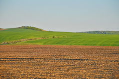 Plowed field. A plowed and a green field Royalty Free Stock Photos
