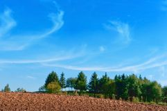 Plowed field, green spruce and blue sky, the plowed field under the blue sky. The plowed field under the blue sky, plowed field, green spruce and blue sky Stock Photo