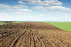Plowed field and green wheat landscape Stock Photo