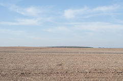 Plowed field with a group of steppe birds Stock Photography