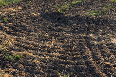 Plowed field after the harvest. In the autumn at sunset Royalty Free Stock Photography