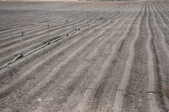 Plowed Field with Lines of Soil Royalty Free Stock Photography