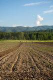 Plowed field with mountain Papuk in the background, Croatia Stock Image