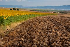 The plowed field near the field of sunflowers stock photos
