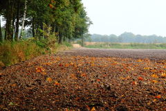 Plowed field with oak leaves. In autumn colours Stock Photography