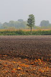 Plowed field with oak leaves. In autumn colours Royalty Free Stock Image