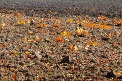 Plowed field with oak leaves Stock Photo