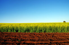 Plowed Field and Oilseed Rape Field Canola Royalty Free Stock Images